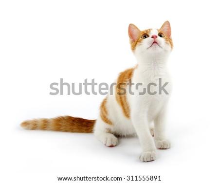 cute kitten - stock photo