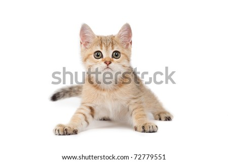 Cute kitten - stock photo