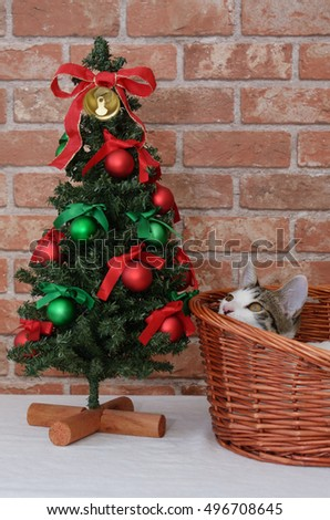 Cute kitten and christmas tree