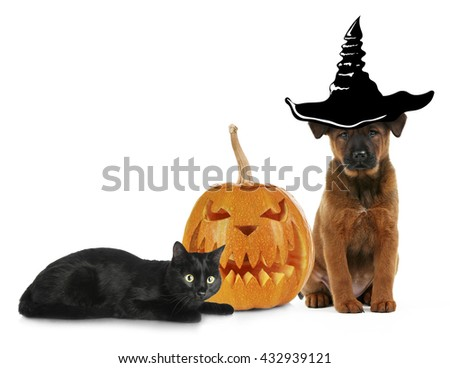 Cute kitten and dog wearing funny costumes for Halloween, isolated on white - stock photo