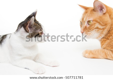 Cute kitten and ginger cat looking at each other