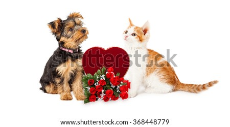 Cute kitten and puppy looking at each other with Valentine's Day candy heart box and roses - stock photo