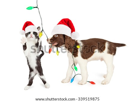 Cute Kitten and Puppy Playing With Christmas Lights - stock photo