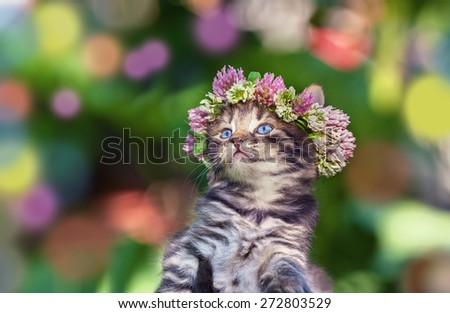 Cute kitten crowned with a chaplet of clover - stock photo