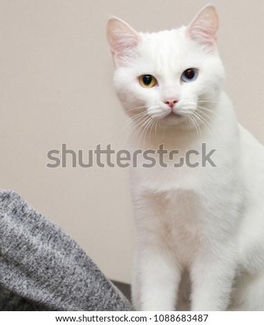 stock-photo-cute-kitten-fluffy-white-tur