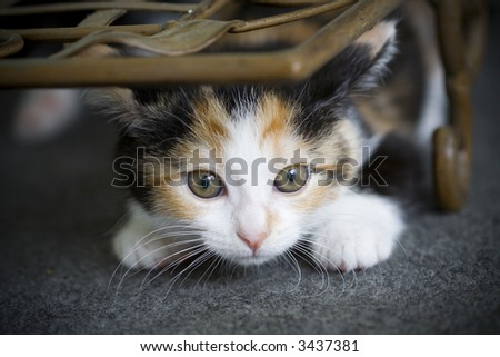 Cute kitten hiding, ready to pounce on something - stock photo
