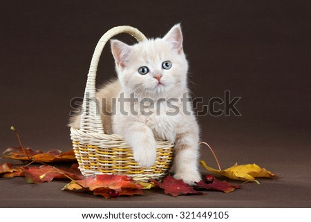 Cute kitten in a basket with yellow leaves on a brown background - stock photo