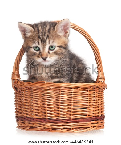 Cute kitten in a wicker basket isolated on white background - stock photo