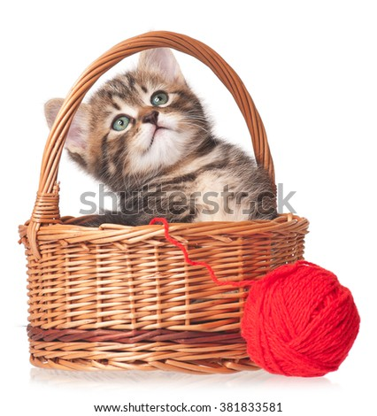 Cute kitten in a wicker basket with red woolen ball isolated on white background - stock photo