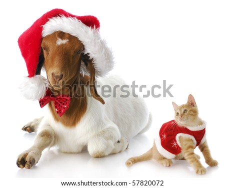 cute kitten in christmas dress looking at goat dressed up in santa hat - stock photo