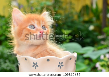cute kitten in flower pot - stock photo
