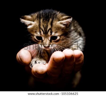 Cute kitten in hand. - stock photo