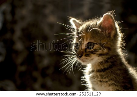 Cute kitten in the backlight - stock photo