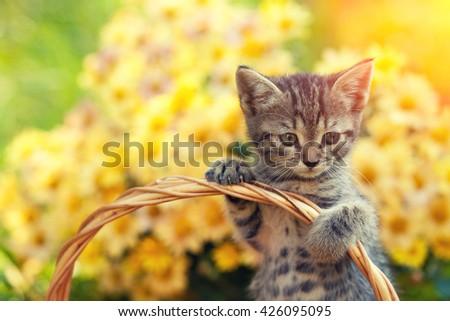 Cute kitten in the basket  in the garden - stock photo