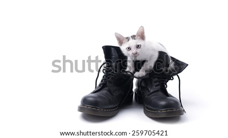 Cute kitten in the boots isolated - stock photo