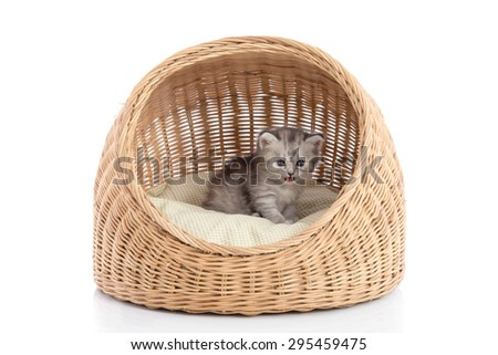 Cute kitten in wicker bed on white background isolated