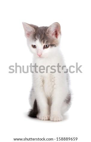 Cute kitten isolated on white. - stock photo