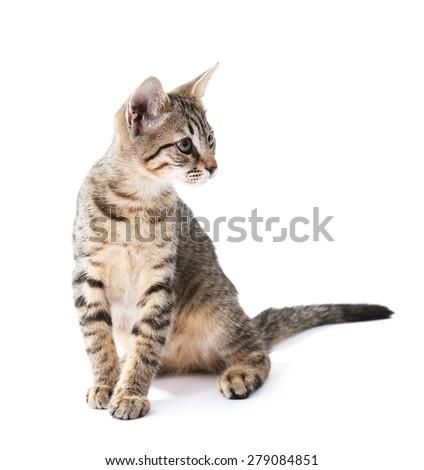 Cute kitten isolated on white - stock photo