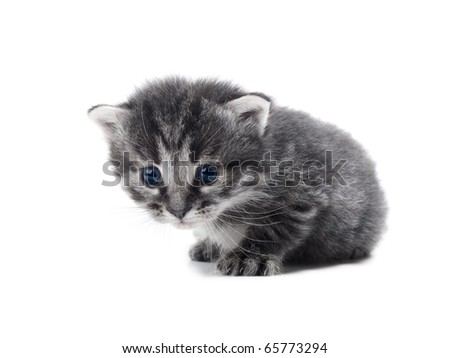 cute kitten isolated over white shallow dof