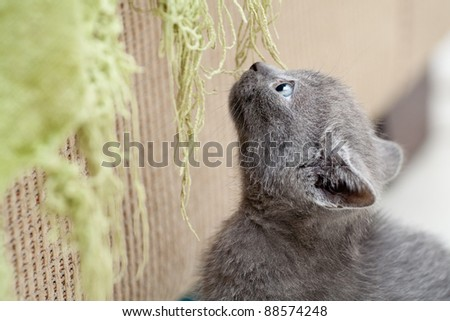 Cute kitten looking up - stock photo