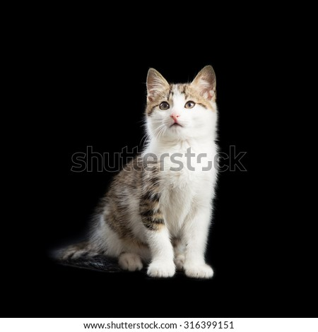 Cute kitten looking up on a black background - stock photo