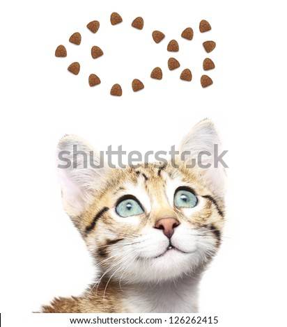Cute kitten looking up on a fish from dry food. - stock photo