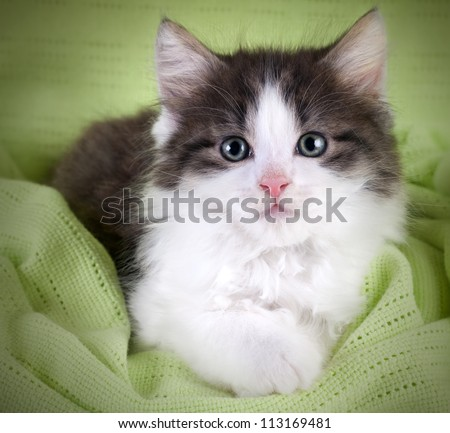 Cute kitten lying on green blanket and  looking at you - stock photo