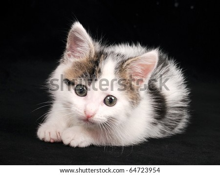 cute kitten on a black background looks in the frame - stock photo
