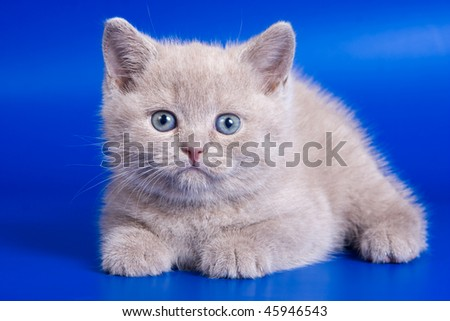 Cute kitten on blue background - stock photo