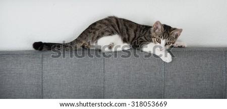 Cute Kitten on Gray Bed Headboard - stock photo