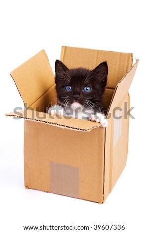 cute kitten on white background - stock photo
