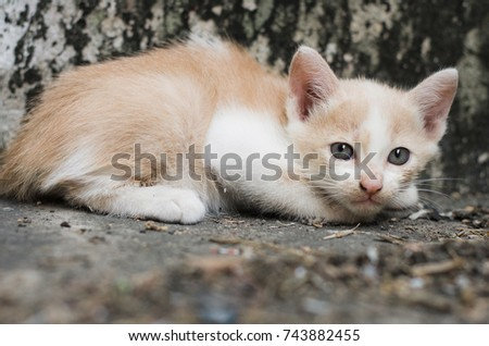 Cute kitten or little cat feeling  fear and unsecure  homeless sitting down on floors grunge wall background  ,animal welfare concept