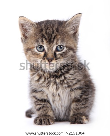 Cute kitten over white background - stock photo