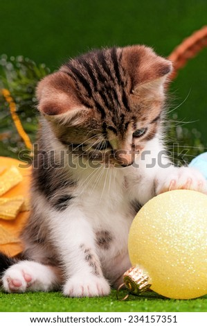 Cute kitten playing Christmas ball on artificial green grass - stock photo