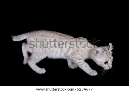 Cute kitten playing on black background