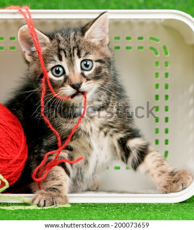 Cute kitten playing red clew of thread in box on artificial green grass - stock photo