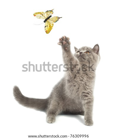 Cute kitten playing with a butterfly - stock photo