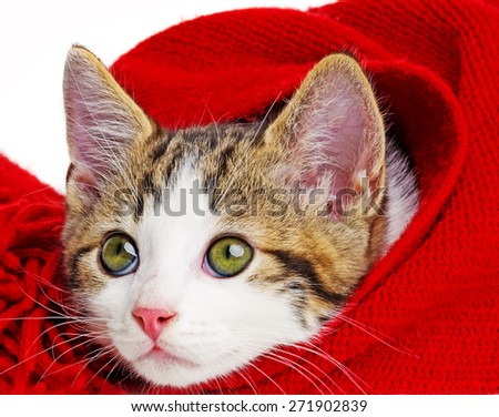 cute kitten playing with a red scarf - stock photo