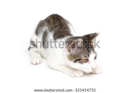 Cute kitten ready to pounce - stock photo