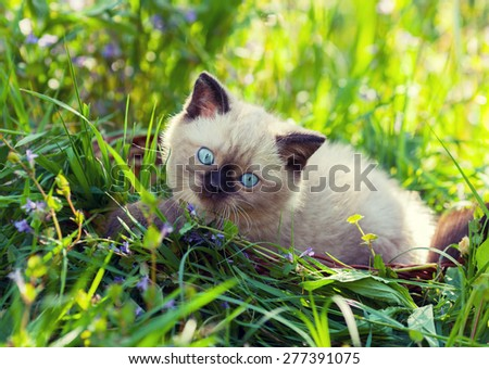 Cute kitten relaxing on the grass - stock photo