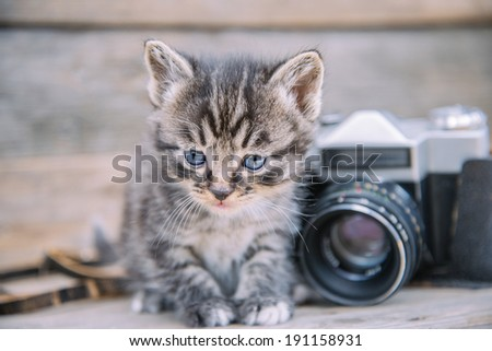 Cute kitten sits near vintage photo camera on a wooden table
