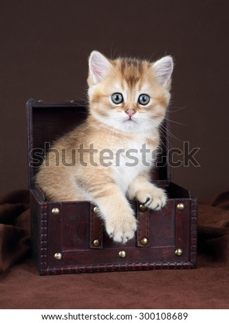 Cute kitten sitting in a chest - stock photo