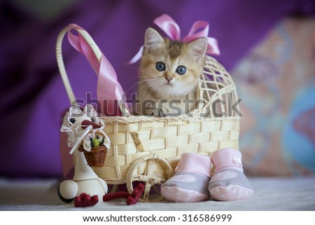 Cute kitten sitting in a child's wicker cradle. - stock photo