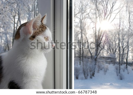 Cute kitten sitting on the window and looking on the winter landscape - stock photo