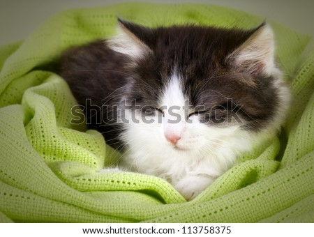 Cute kitten sleeping in green  blanket - stock photo