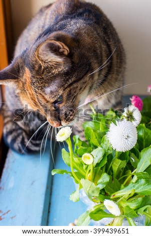 Cute kitten sniffing at a marguerite flowers - stock photo