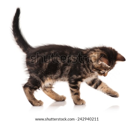 Cute kitten standing profile side view over white background cutout - stock photo