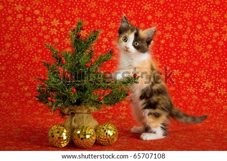 Cute kitten standing up against Christmas tree