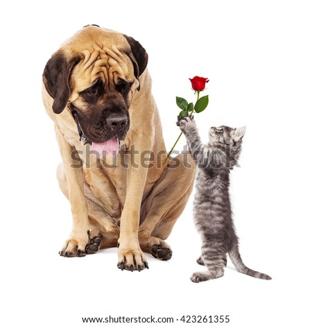 Cute kitten standing up and handing a red rose to a large Mastiff breed dog - stock photo
