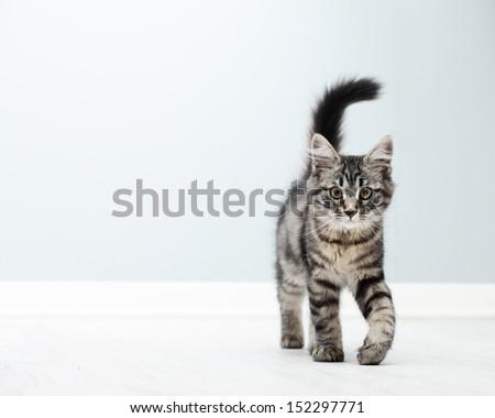 Cute kitten walking on floor at home - stock photo